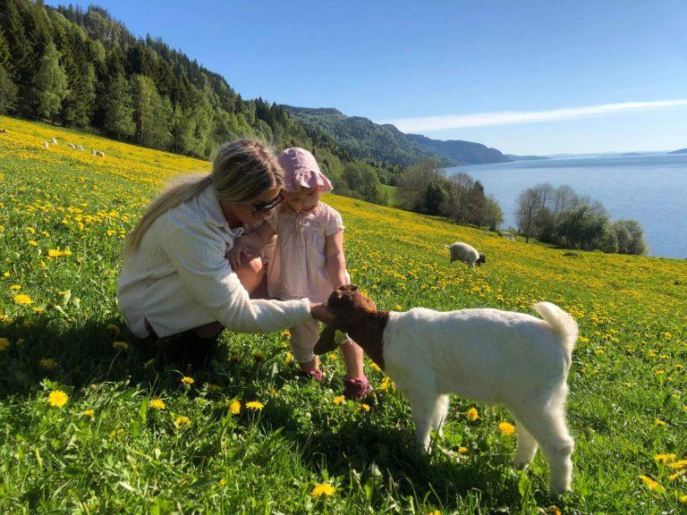 Boergeitene og killingene på gården liker å få besøk